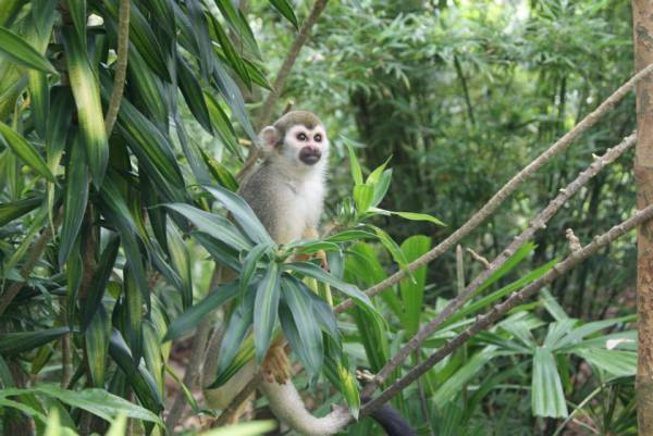 My new inspiration, the Monkey of Calm